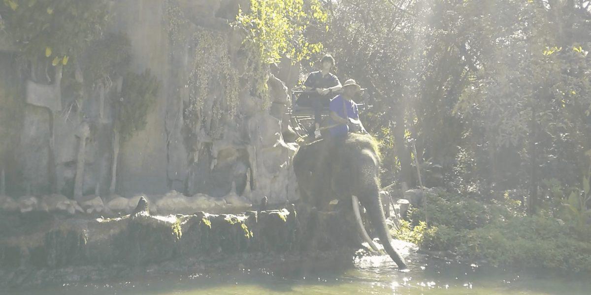ゾウに乗っている,画像