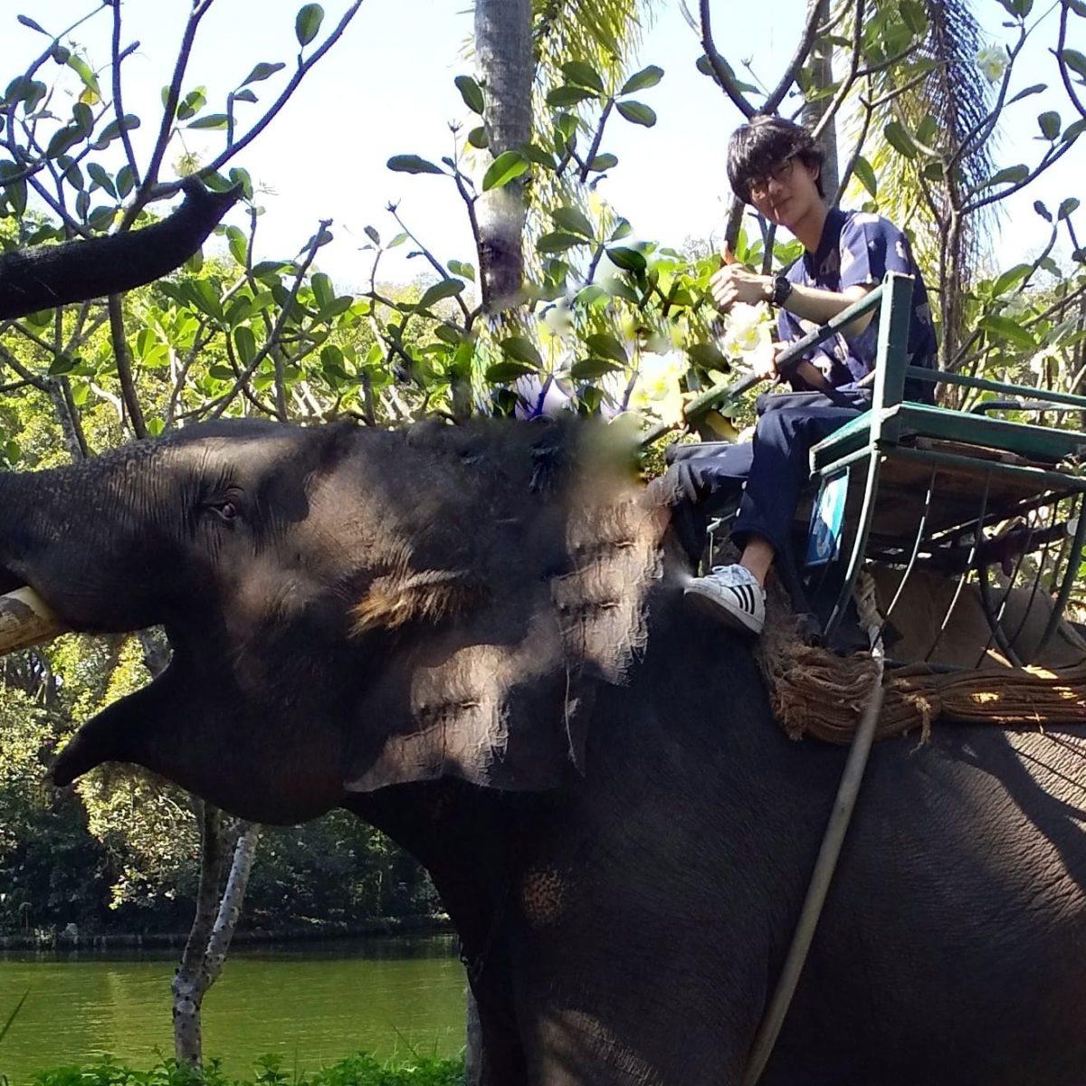 象に乗っている,画像